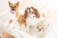 愛犬の消臭首輪「におわんわ」Sサイズ          首回り22〜30cm