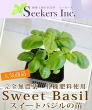 【完全無農薬、有機肥料使用】スイートバジルの苗
