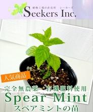 【完全無農薬、有機肥料使用】スペアミントの苗